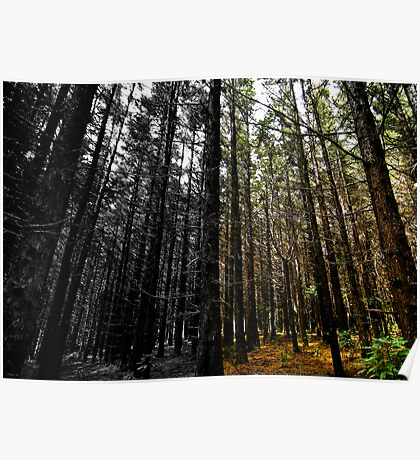 Forest Thru The Trees Poster