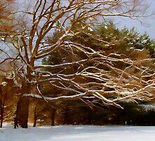 Wind blown tree by vigor
