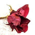 Crimson Death by karolina
