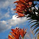 Tiger Lily 2 by Pamela Hubbard