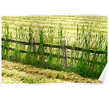 Cat Tail Fence Poster