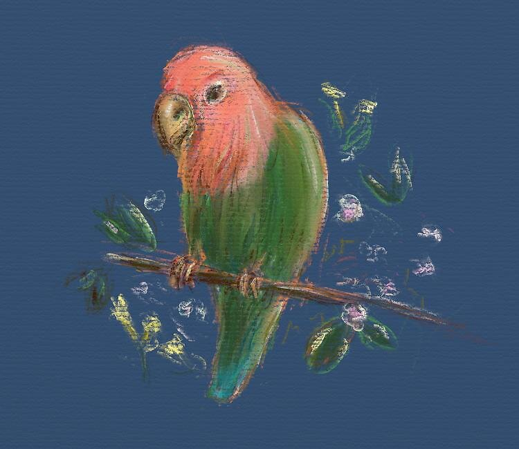 Peach Face Lovebird by DaCapoWalworth