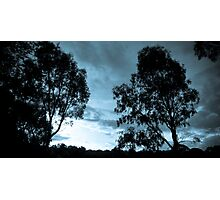 Whispers in the trees. Photographic Print