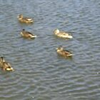 5 little ducks went swimming one day by anaisnais