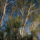 Reflections by Blue Gum Pictures