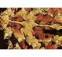Detail of a Thorny Devil (Moloch horridus)  Photographic Print