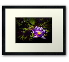 Nymphaea  - Pleasant Day Framed Print