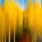 Autumn's Blurred Lines by Sam Scholes