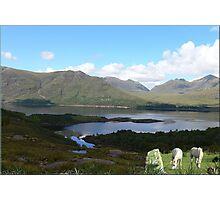 956-Scottish Loch Ponies Photographic Print