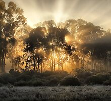 ON THE WAY TO MILDURA SUNRISE by Joseph Darmenia
