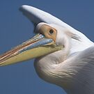 Pelican in flight by Wild at Heart Namibia