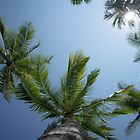 Palm Tree Paradise by Shari Mattox