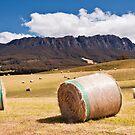 Summertime in Tasmania by Tim Wootton