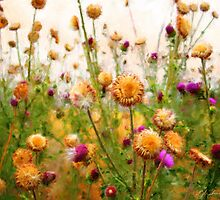 The Beauty of Thistles by Eric Melander