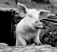 oink!! by Raymond Kerr