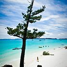 Whitsunday Wilderness by Tim Wootton