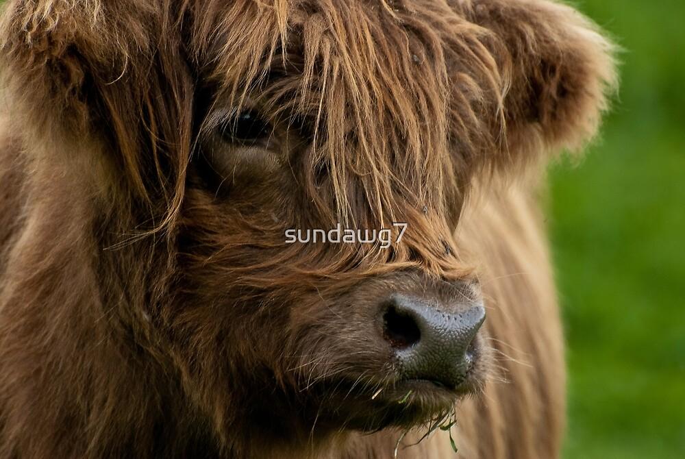 Bovine Puppy by sundawg7