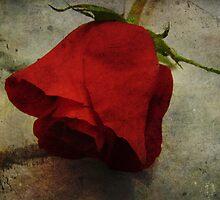 Each Love Deserves A Fine Flower Like The Red Rose by Adri Turner