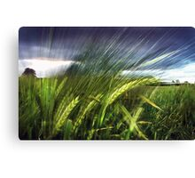 field experiments Canvas Print