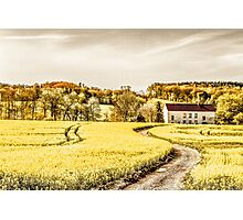 Country road in springtime Photographic Print