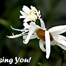 Missing You by shellyb