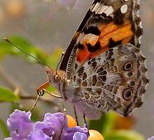 Lone Butterfly by Zeena