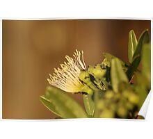 Kenyan Wild Flower Poster