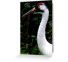 Wooping Crane Greeting Card