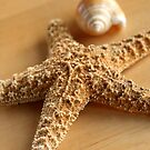 Sea Star and Sea Shell by SmoothBreeze7