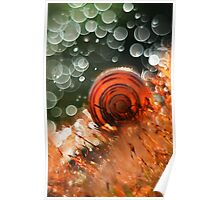 Morning impression with snail shell Poster