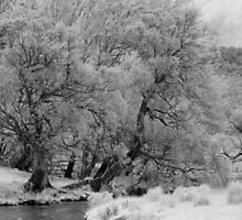 Black Sallees, Mowamba River by Syd Winer