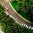 Palm Carts by Justin  Robertson