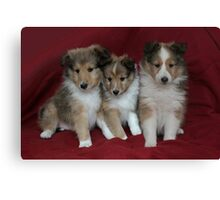 Puppies for Sale!!!! Canvas Print
