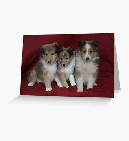 Puppies for Sale!!!! Greeting Card