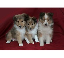 Puppies for Sale!!!! Photographic Print