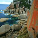 red lichens by Donovan Wilson