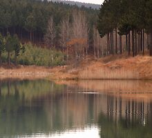 Reflections by Martie Venter