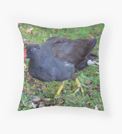 A Moorhen Throw Pillow