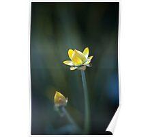 Straw Flower Poster