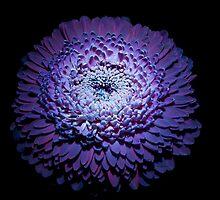 UV Induced Bio-luminescence 9 by AKunde