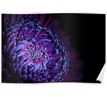 UV Induced Bio-luminescence 11 Poster