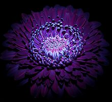 UV Induced Bio-luminescence 10 by AKunde