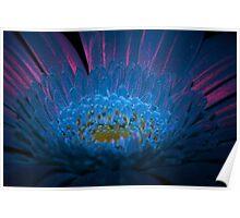 UV Induced Bio-luminescence 13 Poster