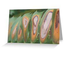 Leaf Patterns Greeting Card