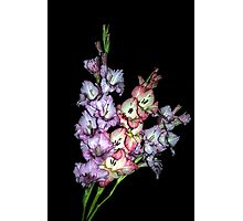 Watercolor Glads Photographic Print