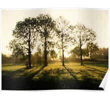 Trees in Sunbeams Poster