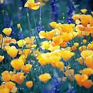 Field of wild poppies,541 viewings, 2 comments 2 favored 1 sale by dragonsnare