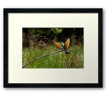 Rainbow Bee-eater 1 Framed Print