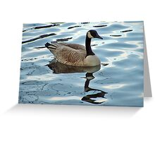 Canadian Goose relecting on Life on the Pond Greeting Card