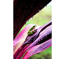 Little frog in my Garden Photographic Print